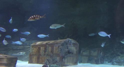 Auckland Fish Tunnel  -- Kelly Tarlton's Aquarium in New Zealand